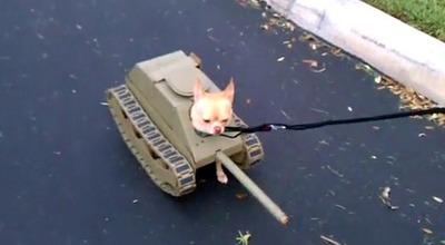 Déguisement chien tank