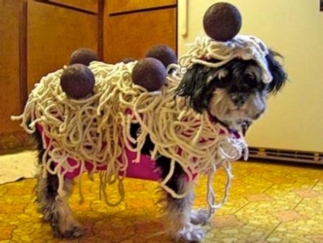 Déguisement chien bolo