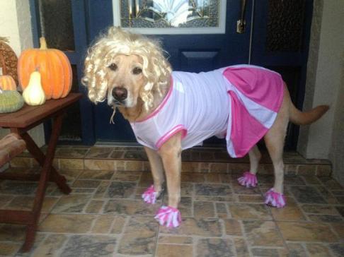 Déguisement chien pompom girl